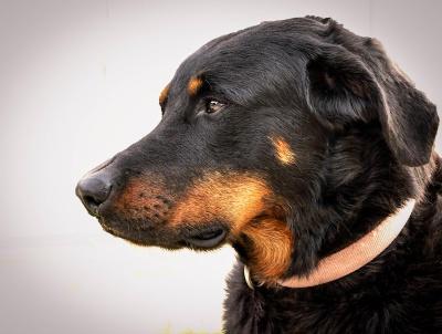 Boudu profile