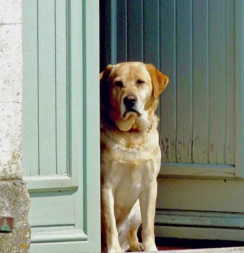 Freddie in the Door