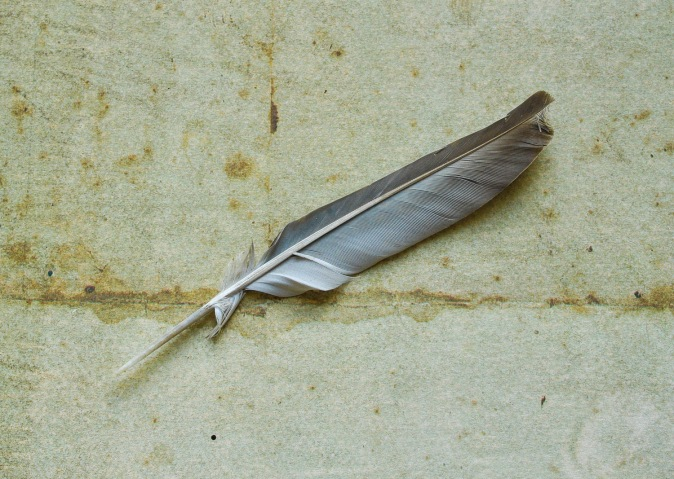 Single feather narrow