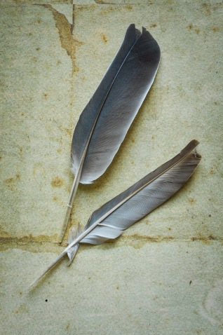 Two feathers set