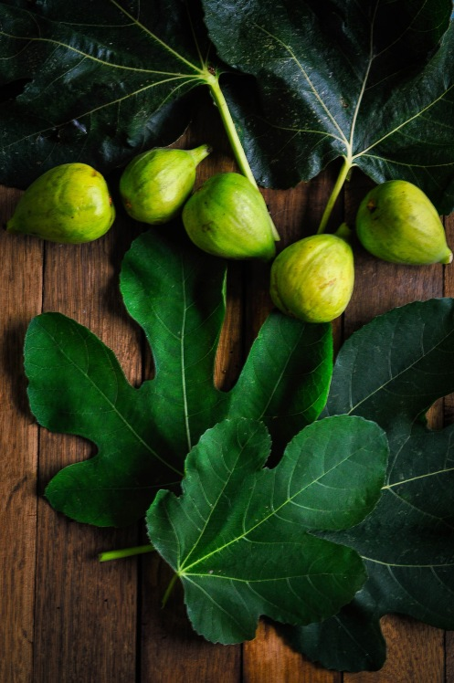 Figs and leaves 3