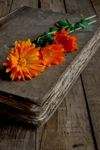 marigolds book
