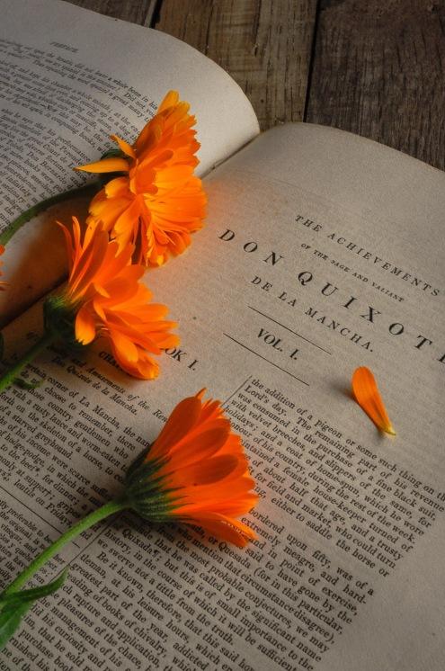 marigolds Don Quixote book