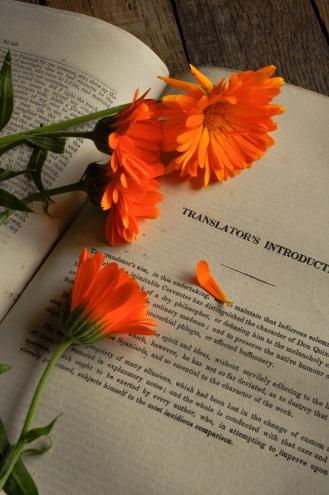 marigolds Translator's book