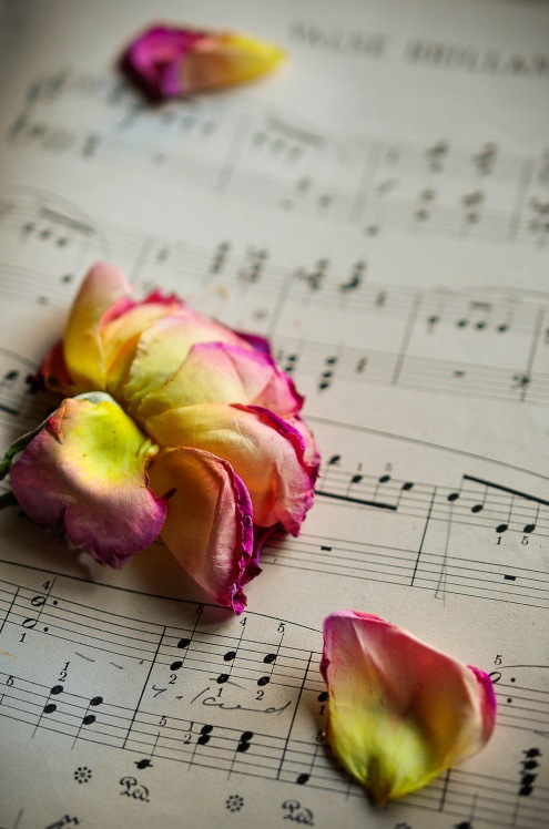 Sheet Music & faded rose 1_