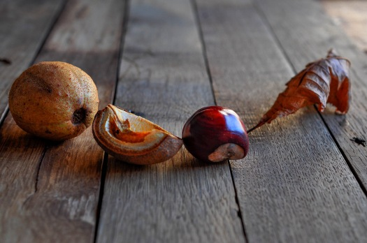 Conkers & leaf