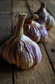 Rose Garlic 1