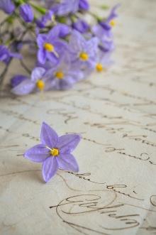 Solanum 16