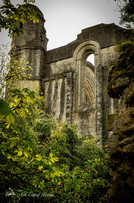 Abbey Ruins 6