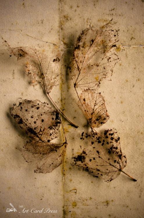 Ghost leaves 1