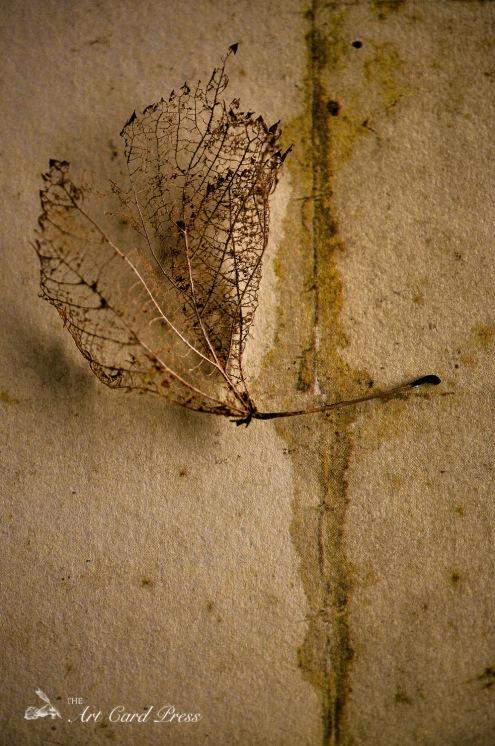 Ghost leaves 2
