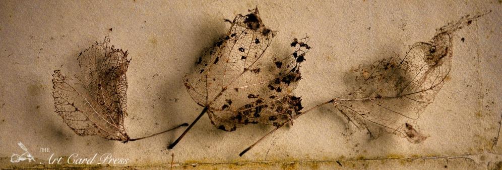 Ghost leaves 3