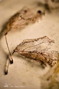 Ghost leaves 7