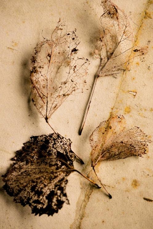 Ghost leaves 8