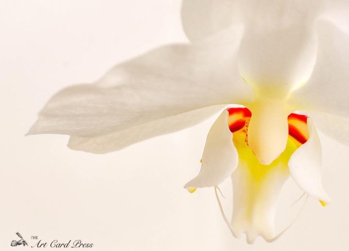 Orchids 9_-001