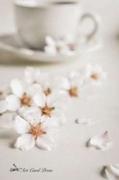 Almond Blossom 1-001