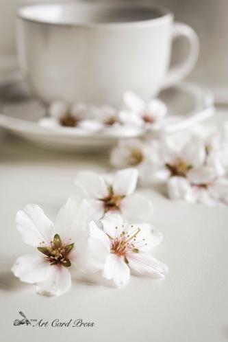 Almond Blossom 11