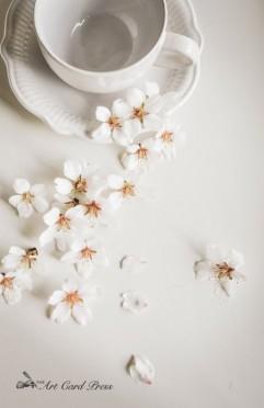 Almond Blossom 3-001