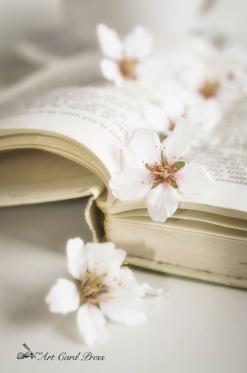Almond Blossom 4-001