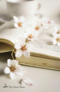 Almond Blossom 5-001
