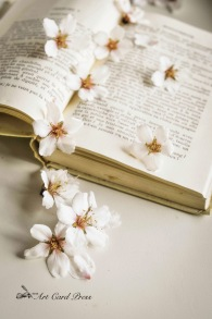 Almond Blossom 6-001