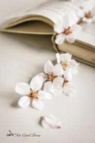 Almond Blossom 7-001
