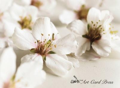 Almond Blossom crop