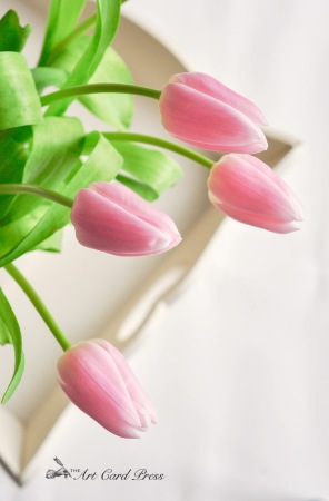 Pink Tulips 12