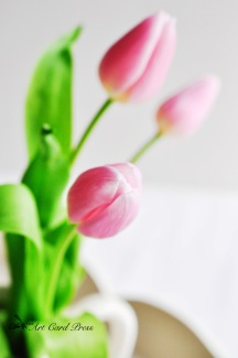Pink Tulips 2