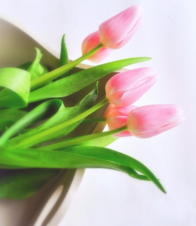 Pink Tulips 20 crop
