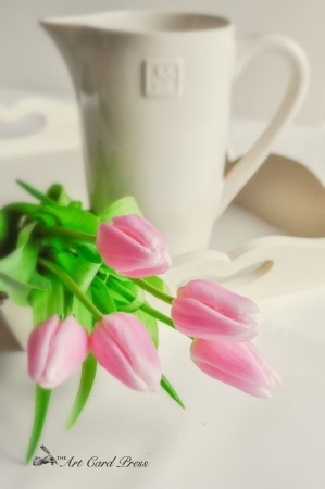 Pink Tulips 9-001