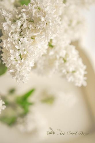 White Lilac 3