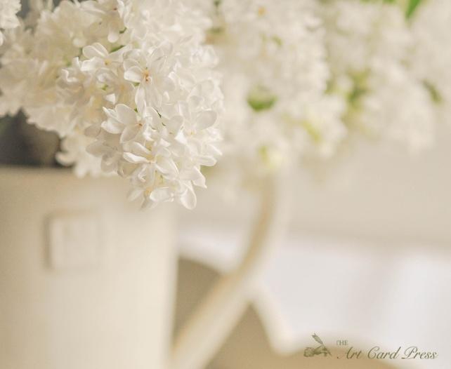 White Lilac 5
