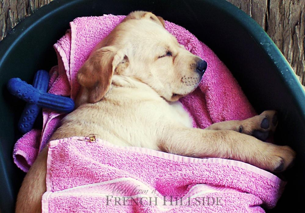 Copy Freddie as a puppy