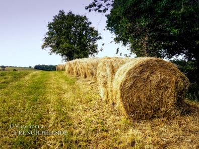 Hay Bales 5