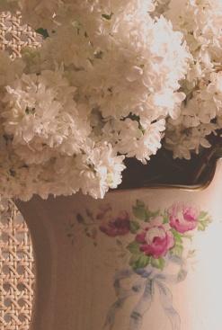 Lilac vintage 14