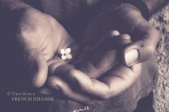 Hands and tiny flower 9