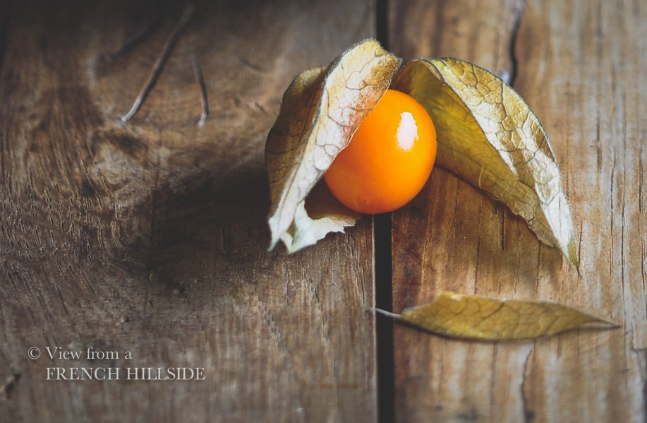 Physalis single fruit