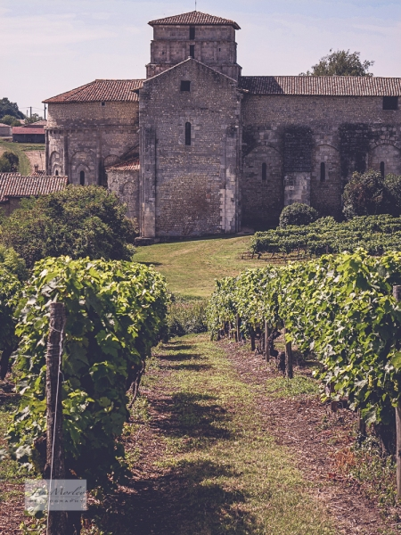 Berneuil church and vines