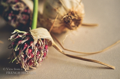 Garlic & Flowers 13