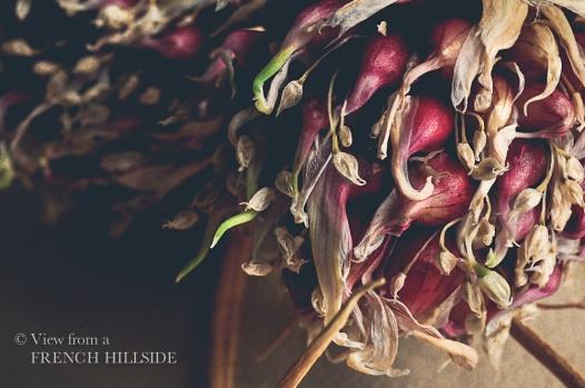 Garlic & Flowers 14