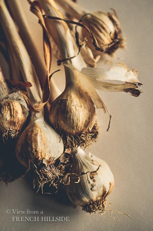 Garlic & Flowers 3