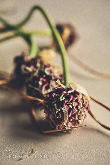 Garlic & Flowers 9