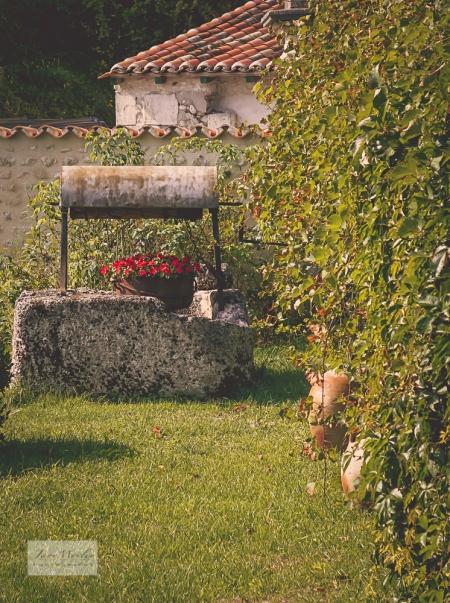 Martine's Garden