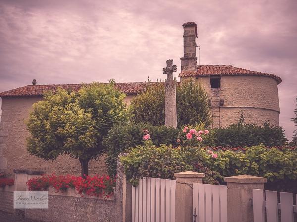 St Leger roses