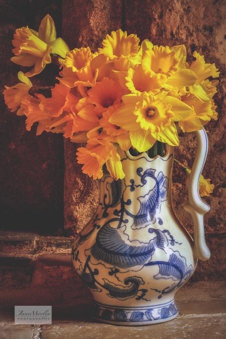Spring Daffodils and jug